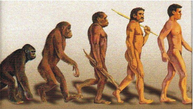 La evolución de los homínidos Los primeros mamíferos se originaron a partir de un grupo de reptiles primitivos hace aproximadamente 200 millones de años y coexistieron con los dinosaurios durante 130 millones de años. La extinción de los dinosaurios fue seguida por una rápida radiación adaptativa de los mamíferos.