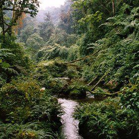 Rwanda gorilla trekking safaris   Expert Africa