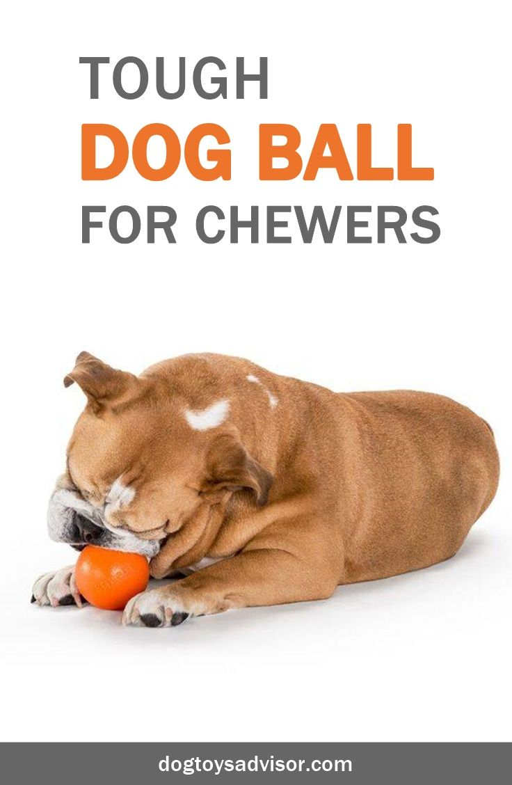 Over The Years We Ve Been Looking For A Durable Dog Ball And We