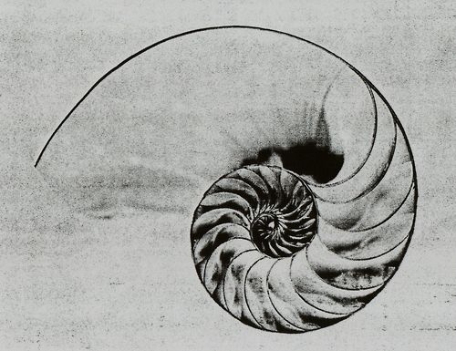 golden ratio tattoo - Google Search
