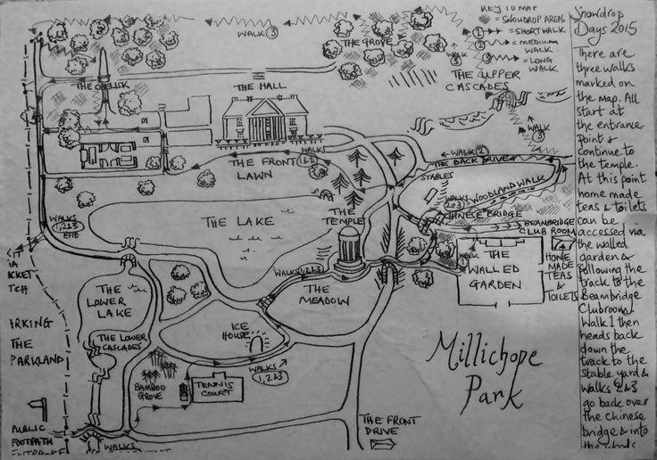 Snowdrops at Millichope Park Shropshire 2015