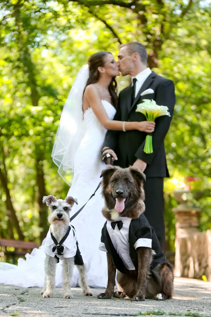 A Blue And Black Canadian Wedding With Dog Ring Bearers