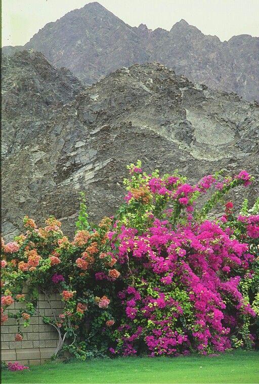 Soltanto di Oman Mascat