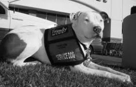 "BROUGHT TO YOU BY THE RESCUE ME OHIO 'HELP ME HOUR"" DID YOU KNOW? Pitbulls are commonly used as therapy dogs. https://lovemypitbull.wordpress.com/2013/06/21/ten-facts-about-pit-bulls-every-one-should-know/"