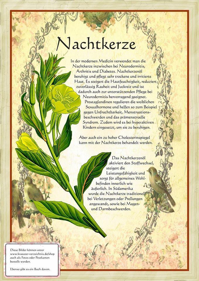Nachtkerze http://www.kraeuter-verzeichnis.de/