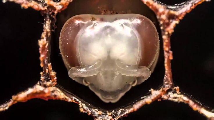First 21 days of bees - HD