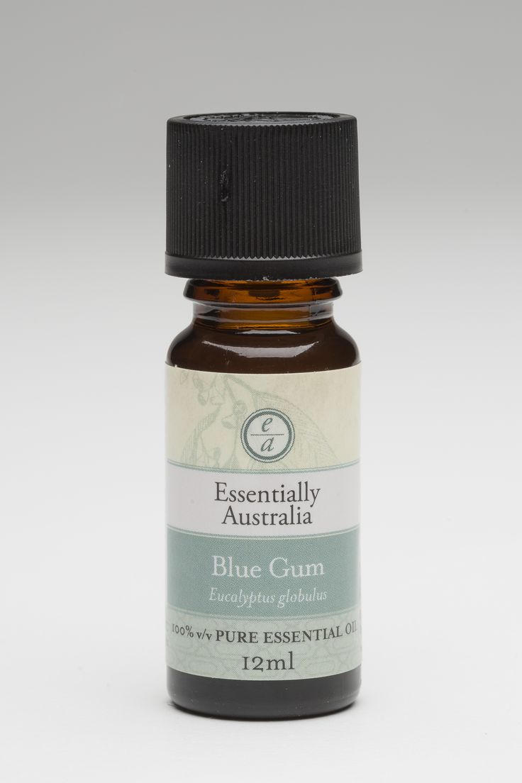 Eucalyptus - Blue Gum (Eucalyptus globulus) The most used and well known Eucalyptus variety.