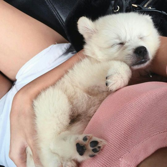 Pinterest: @greeniexo... looks like a baby polar bear
