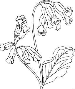 free vector rose outline clip art  flower drawing botanical art flower coloring pages