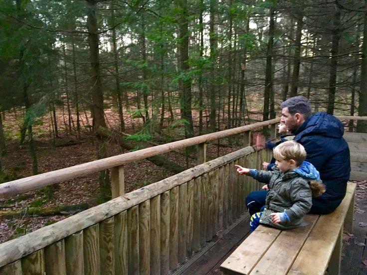 Zin in een fijne en avontuurlijke wandeling met kinderen? Breng een bezoek aan Stadspark Berg en Bos in Apeldoorn. Wandelen, spelen, klimmen: het kan daar!