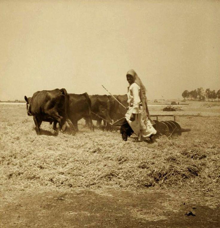 الرملة، فلسطين ١٩٣٨ Ramla, Palestine 1938 Ramla, Palestina 1938