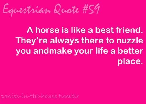 horse sayings   equestrian # equestrian problems # horses # horse love