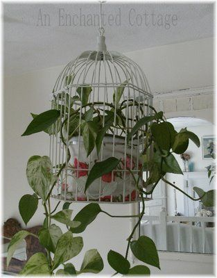 bird cage planter  So I can actually have house plants without my cats EATING them!