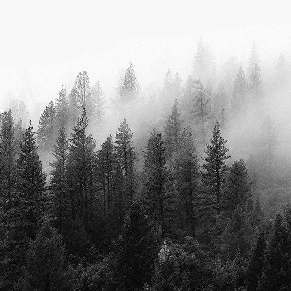 Set Of 3 Scandinavian Minimalist Forest Photography Prints Etsy Nature Iphone Wallpaper Preppy Wallpaper Nature Inspiration