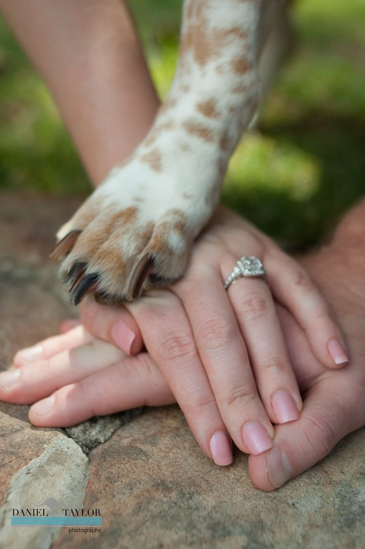 Check out this couple's pawsworthy engagement photo with their dog! Great wedding/engagement photography idea for couples with a pet.