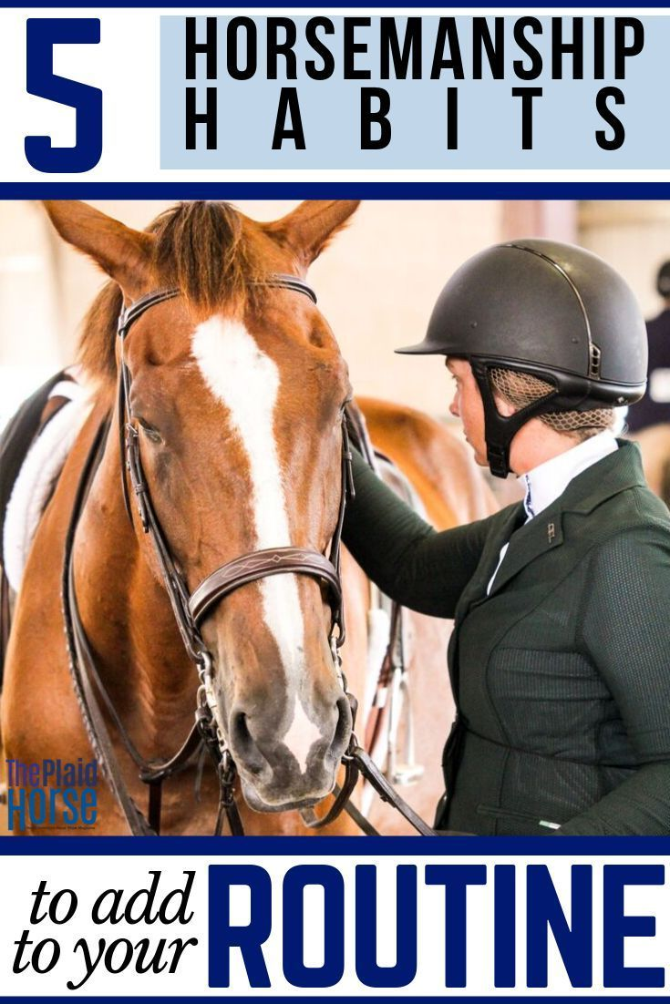 5 Good Horsemanship Habits To Add To Your Routine Horse Care Equine Care Horsemanship