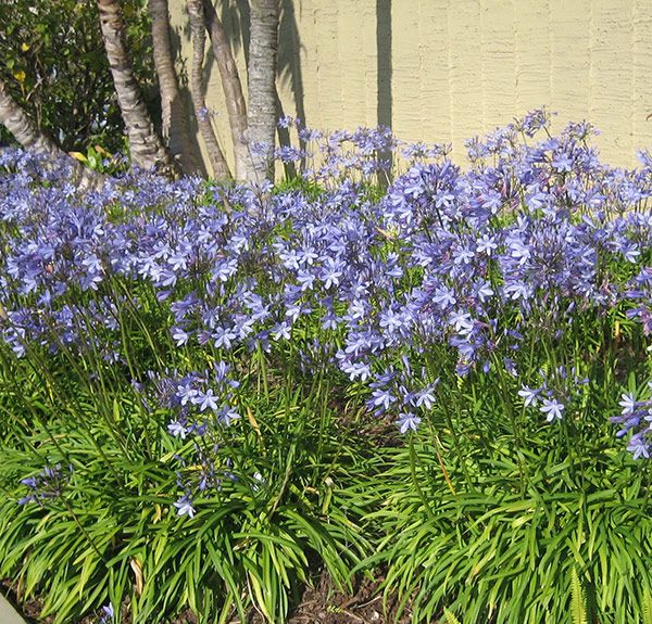 37 best get the look mediterranean garden images on for Low maintenance summer plants