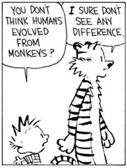 Calvin & Hobbes on theory of evolution