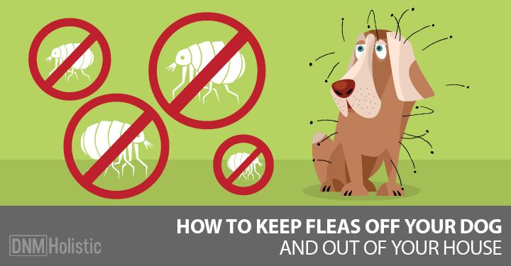 Our Best Home Remedies For Fleas