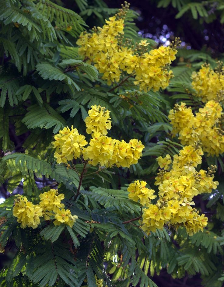 A tree with yellow flowers