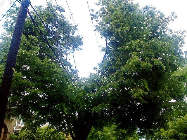 Trees adapting