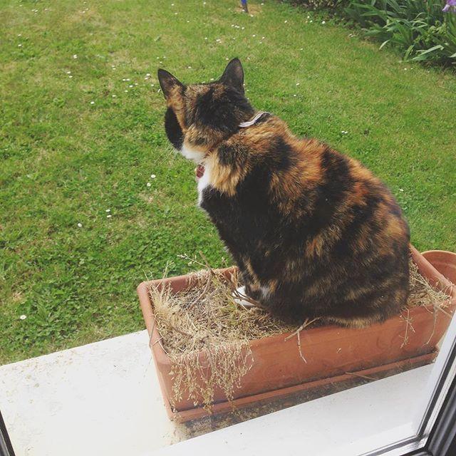 New Flower ! En vrai je crois que c'est devenu inutile de cultiver le moindre truc dans ce pot... 😄  #CatPower #Cat #Flower #FlowerPot #Nature #Animal #garden