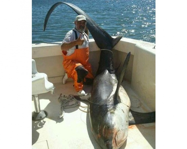 1000 images about thresher shark alopias vulpinus on for Shark fishing from shore