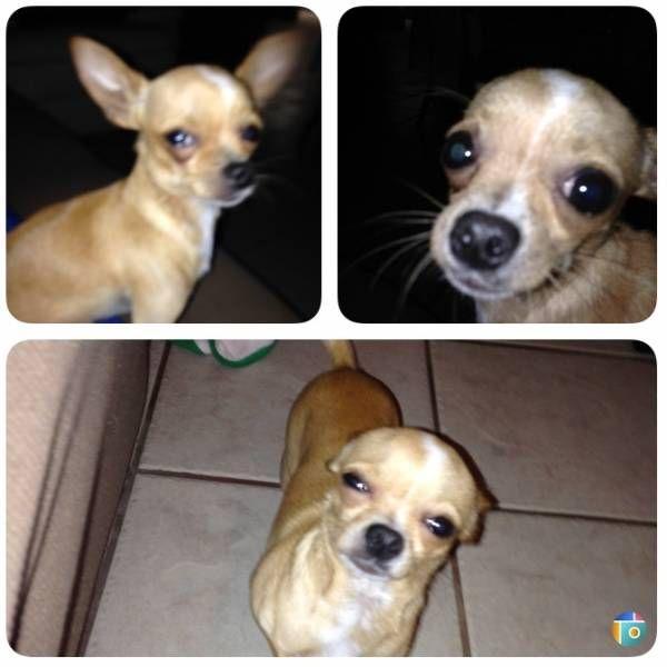 LOST DOG: 07/27/2017 - San Benito, Texas, TX, United States. Ref#: L34427 - #CritterAlert #LostPet #LostDog #MissingDog