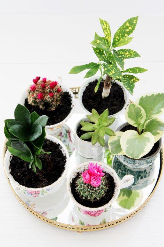 17 meilleures id es propos de plante d 39 int rieur sur pinterest plantes plantes d 39 int rieur. Black Bedroom Furniture Sets. Home Design Ideas