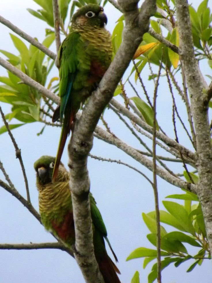 #birds #nature