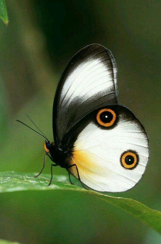 Butterflies And Moths 20