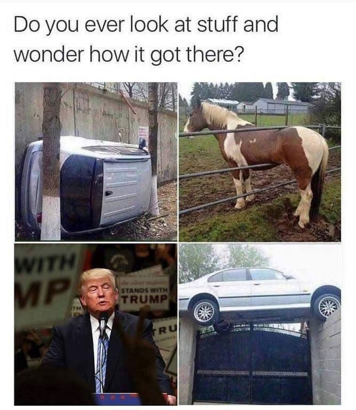 Funny Donald Trump Memes: Do You Ever Wonder?