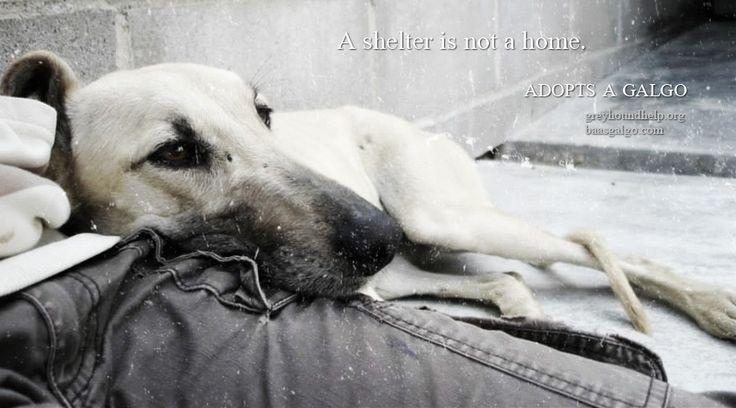 Adopt ...