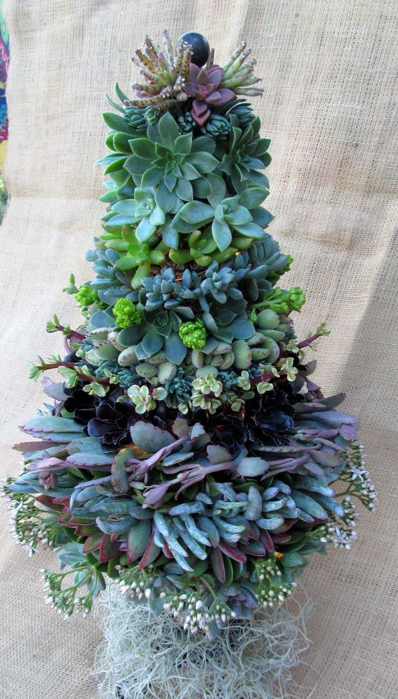 Succulent Christmas Tree with lights by SucculentSolutions on Etsy, $160.00