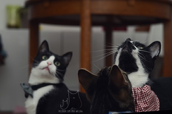Smo, Beci & Ryś #cat