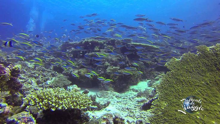 Hanimaadhoo Maldives The Barefoot Eco Resort 2015