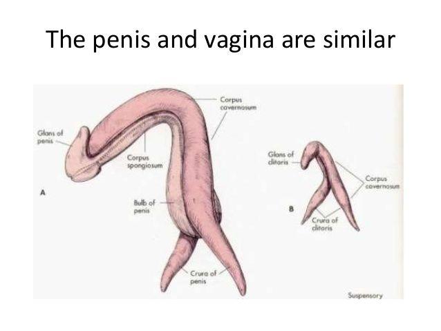 anatomiya-i-fiziologiya-seksa-film