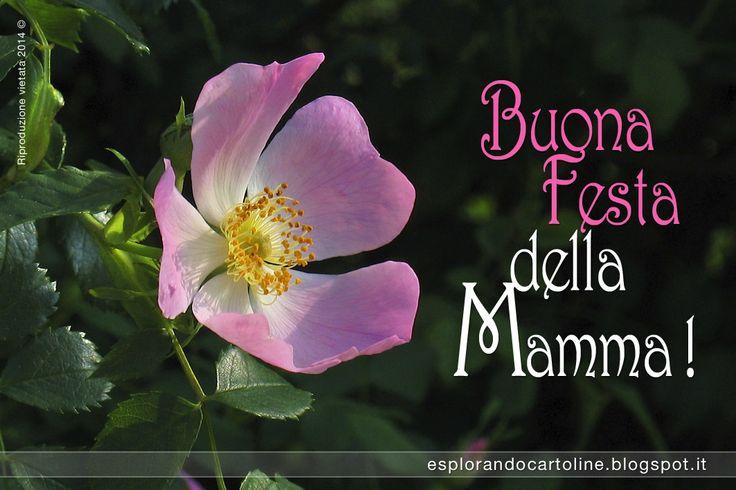 Buona Festa della Mamma! Ti voglio tanto bene! Buon Compleanno cara Mamma! Cartolina di auguri da scaricare gratis.