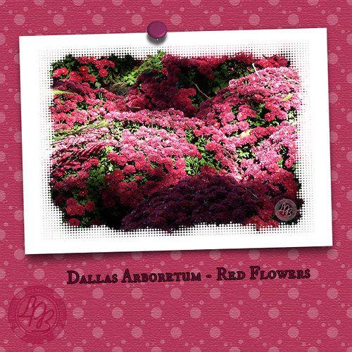"""""""Pohlednice Rudé květy"""" (""""Postcard Red Flowers"""")   approx. $1.19"""