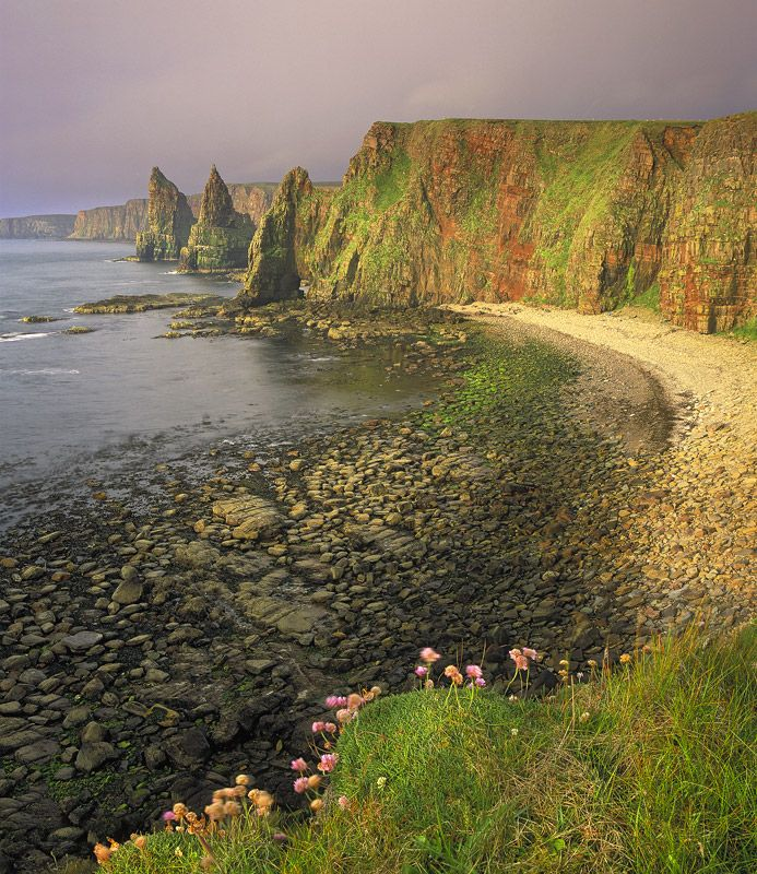 Duncansby Honey, Duncansby Stacks, Caithness, Scotland, fantastic, cliff, dawn, sun, honey, warm, tapestry, pink, thrift photo