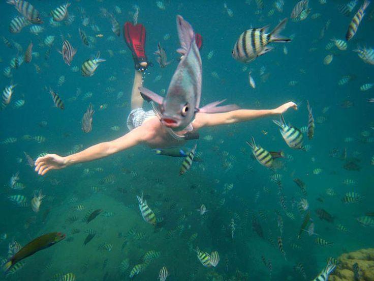 underwater-fish-photobomb-animal-photobombs #perfecttiming
