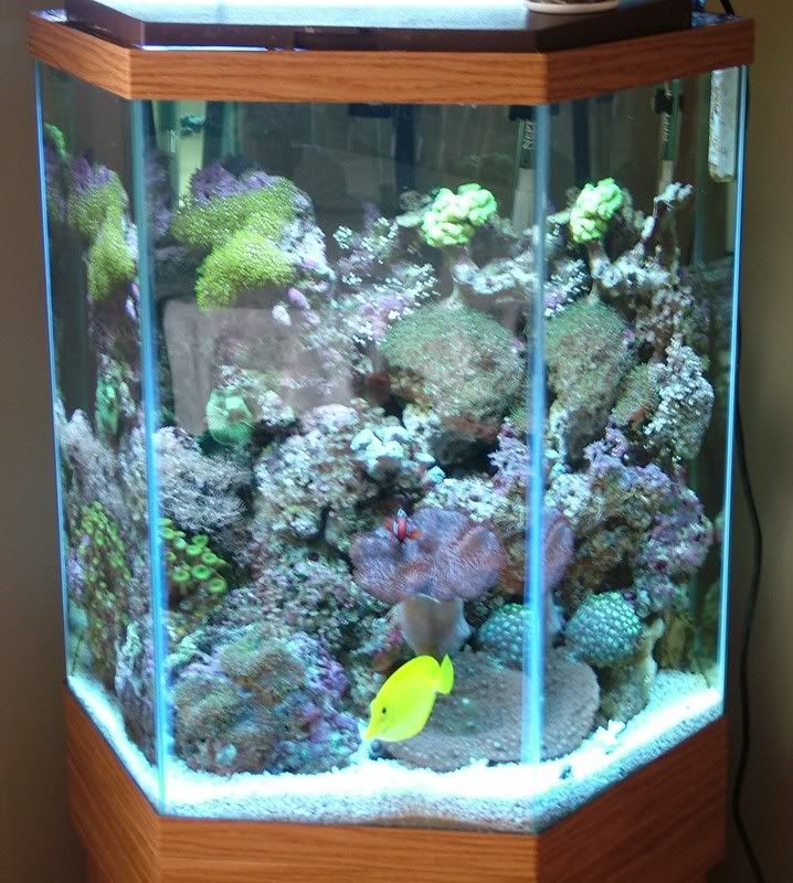 55 gallon hexagon fish tank woodworking projects plans for 70 gallon fish tank