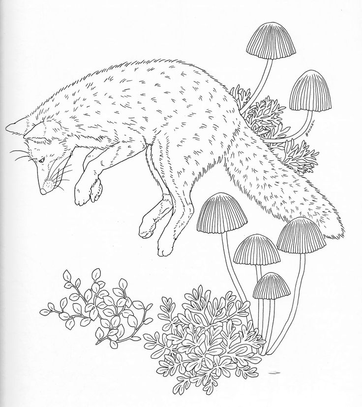 76 best Free Colouring Pages - Birds & Butterflies images on ...