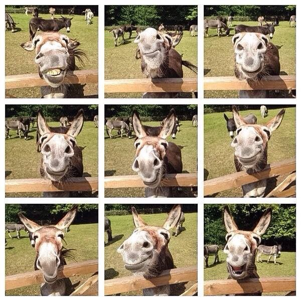 Smiling donkey. When I was a little girl visiting an Amish town we stopped at a farm and took a picture with a horse BUT the donkey stepped in and took the show.