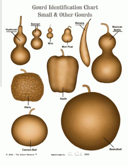 Gourd Identification Chart