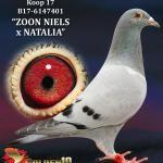 "017 - B17-6147401 ""ZOON NIELS x NATALIA"" ♂ | De Duif"