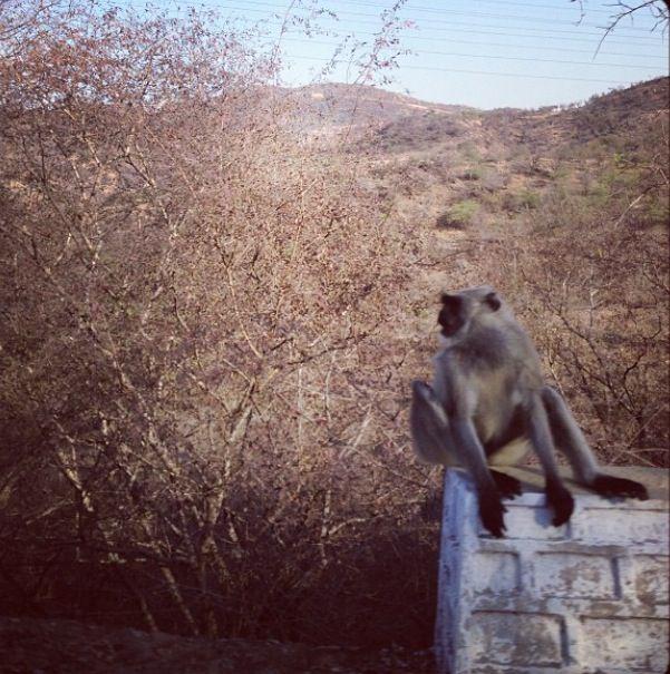 Jaipur. India. Monkey!!
