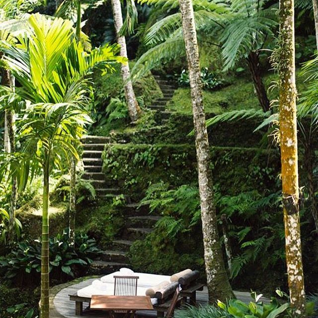 A place for two in the middle of the rainforest ☺️🤗🌴🌴🐚🙉🙈🙊! #gracejacobswim #bikini #love #rainforest #indonesia #jungle #sea #sand #beach #swim #pool #holiday #travel #travelling #travelinspiration #view #photography #fashion #instafashion #instadaily #instagood #bali #caribbean #bahamas #barbados #seychelles #ibiza #southoffrance #spain #monday