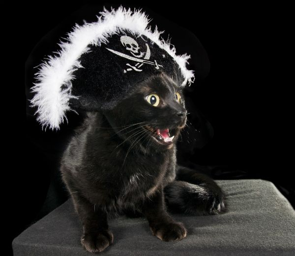 """<a href=""""http://www.shutterstock.com/pic-87406076/stock-photo-black-cat-in-the-hat-pirate-on-a-dark-background.html"""" target=""""_blank"""">Photo: Shutterstock</a>"""