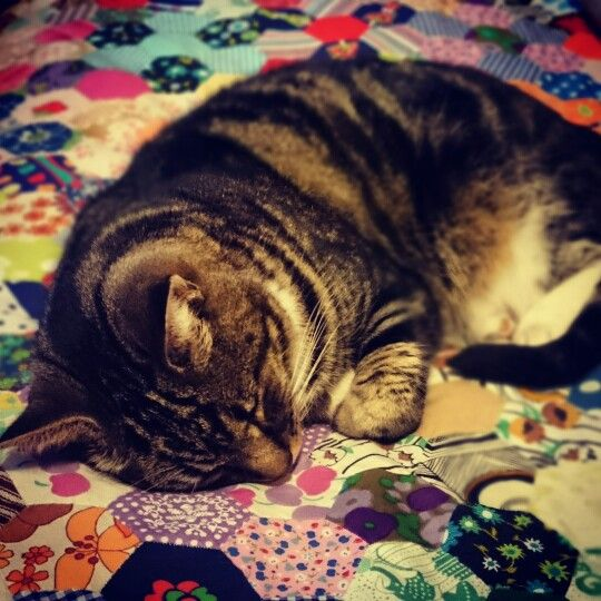 Thomas the cat napping on my vintage quilt. :)